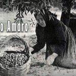 Raccoglitrici di olive in Calabria in un documentario del 1959